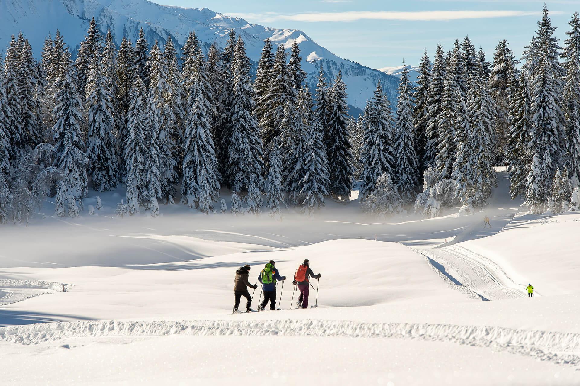 263_190116_Winterweitwandern